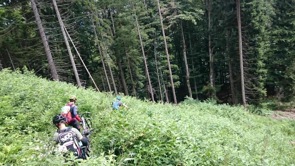 bike-hike-mountainbiking-bikefex-pedalritterinnen-steiermark-totes-gebirge-ennstal-mountainbike-singletrail